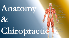 Dr. Le's Chiropractic & Wellness, L.L.C. proudly delivers chiropractic care based on knowledge of anatomy to diagnose and treat spine related pain.