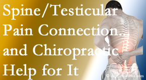 Dr. Le's Chiropractic & Wellness, L.L.C. explains recent research on the connection of testicular pain to the spine and how chiropractic care helps its relief.