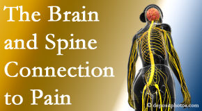 Dr. Le's Chiropractic & Wellness, L.L.C. shares at the connection between the brain and spine in back pain patients to better help them find pain relief.