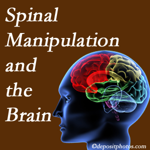 Dr. Le's Chiropractic & Wellness, L.L.C. [shares research on the benefits of spinal manipulation for brain function.